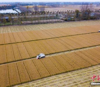 """中国农业部启动实施""""农业质量年""""行动"""