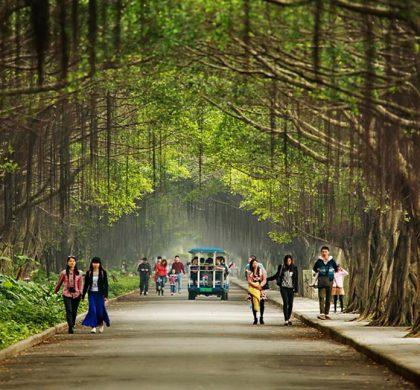 中国加快森林城市群建设