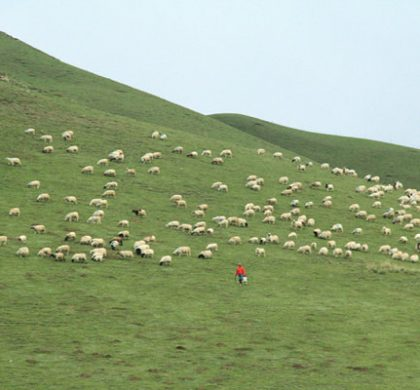 互联网让青藏高原牛羊肉走进大城市