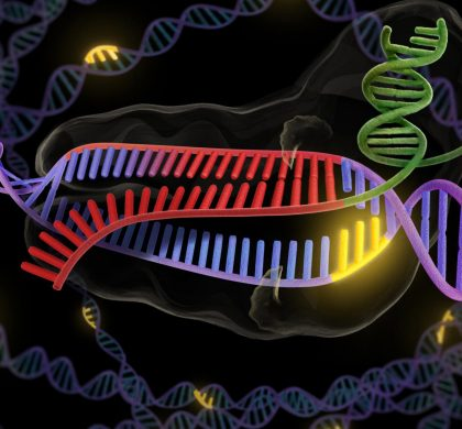 (科技)美农业部确认不监管基因编辑作物