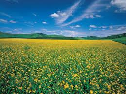 富民兴村三年行动方案,2020年建成逾千个农业特色专业村